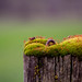 Mossy fence post by dsgetch