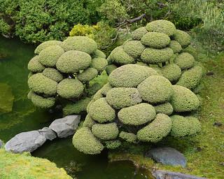 Japanese Garden SR600452