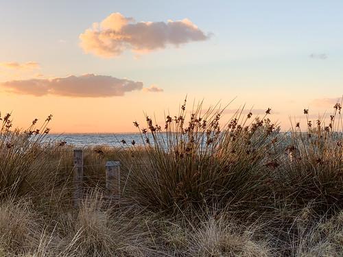 iphone grasses beach shoreline australia melbourne portphillipbay water sunset clouds nature eveninghaze flowers goldenglow brighton seascape victoria sea