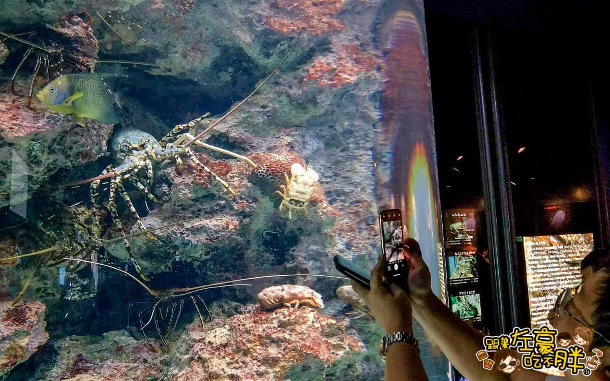 沖繩美麗海水族館-40