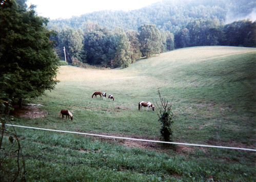 horses fog kentucky ky gray pastures paints mists pintos filmphoto quarterhorses teresashorses