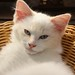 Angel in the cat stand. by Photos by L-1172