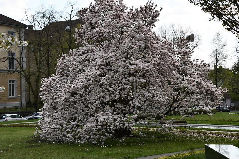 Magnolia 19.04 (1)