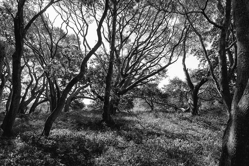 sony022 bw blackandwhite trees backlit forest pogonip santacruz 2019