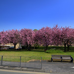Spring colour in Preston