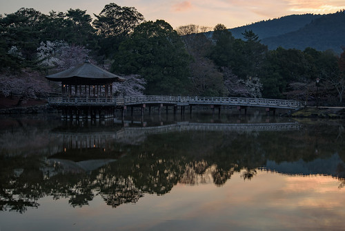 japan 奈良県 奈良市 建築物 architecture 桜 cherry 日の出 sunrise