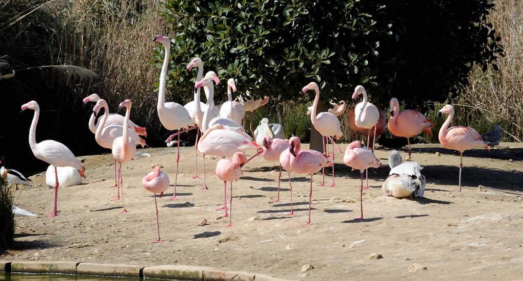 Malta met kinderen: bezoek het Bird Park