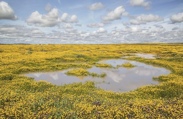 Vernal Pool & Wildflowers