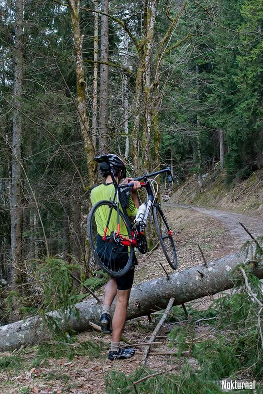 Course à obstacles: le minet saute les arbres