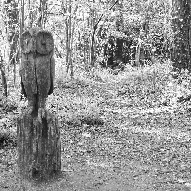 Carved owl in the woods