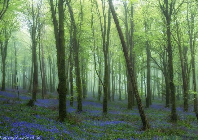 Misty Woods..