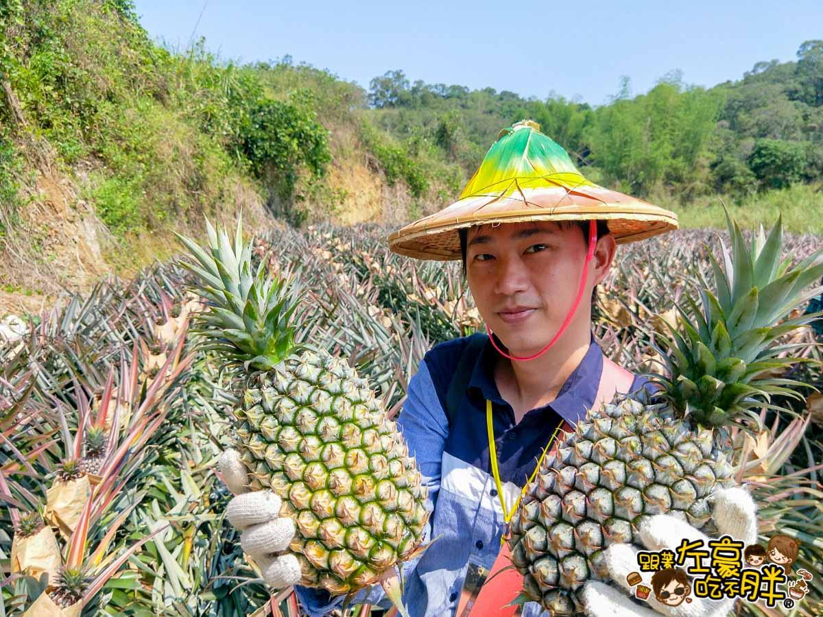 高雄一日農夫趣-大樹採鳳梨-13