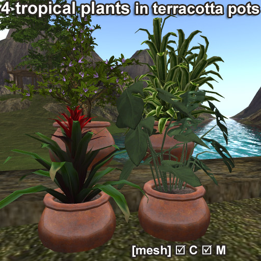 4 tropical plants in terracotta pots