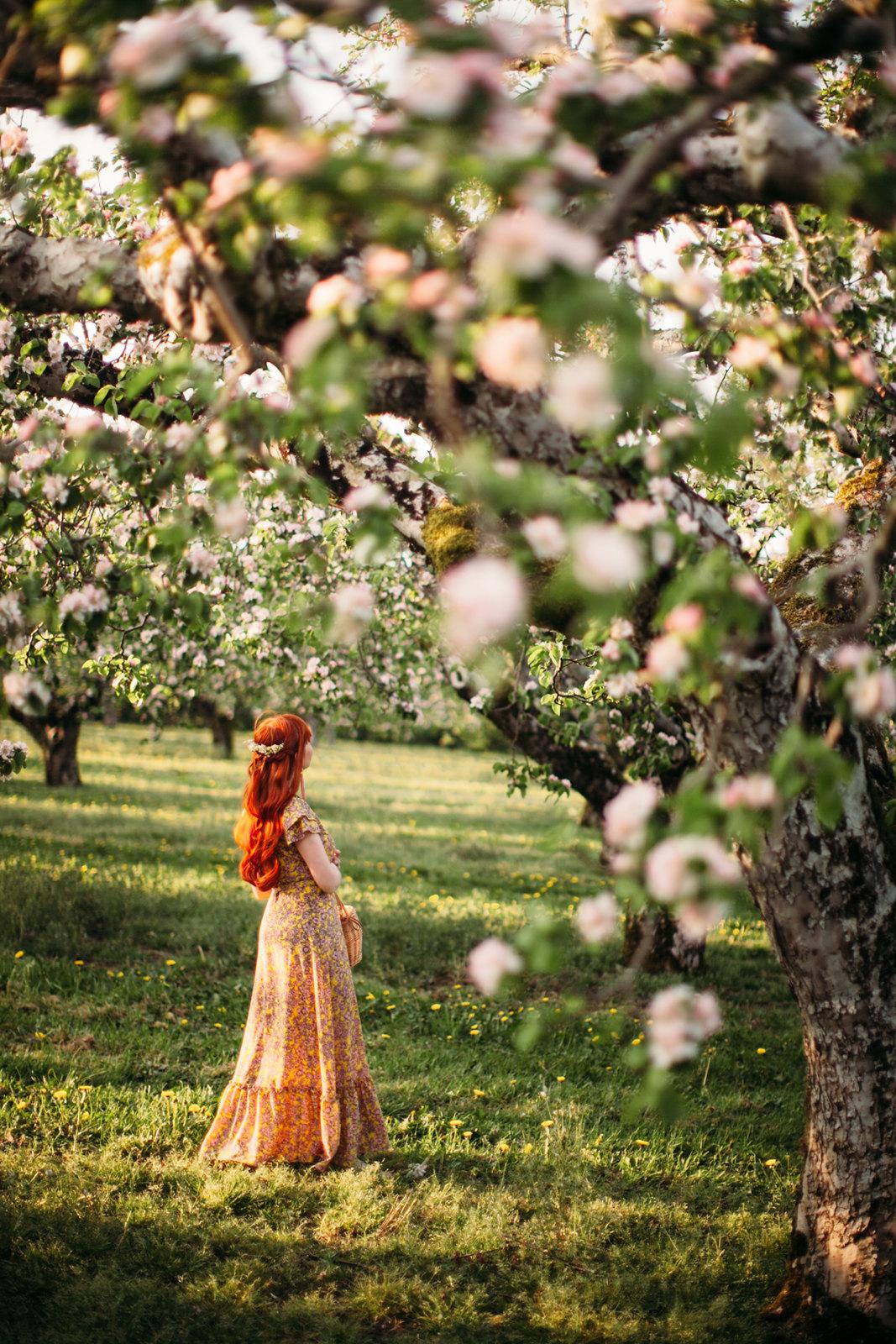 apple blossom-28