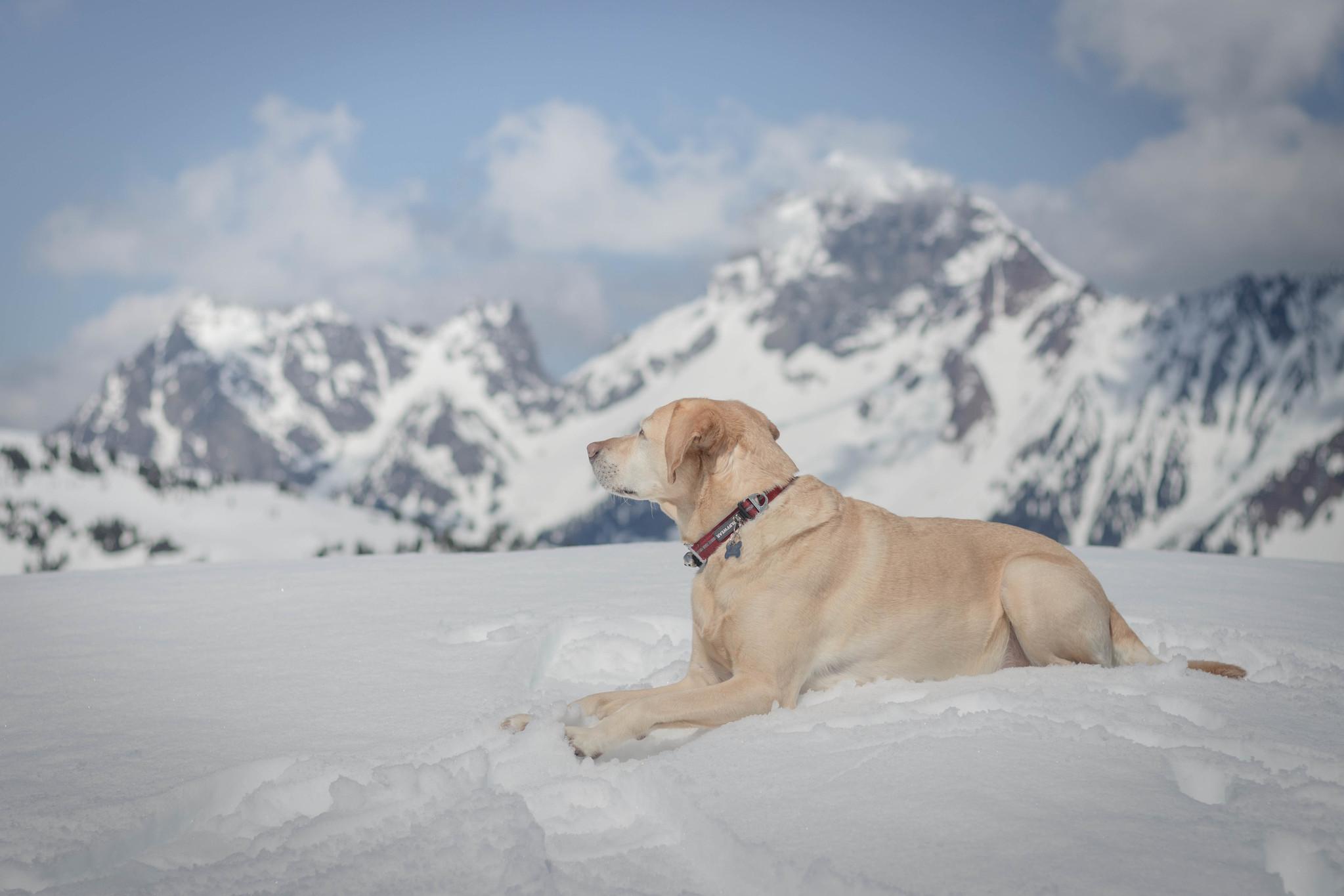 Summit dogs on Keep Kool Butte