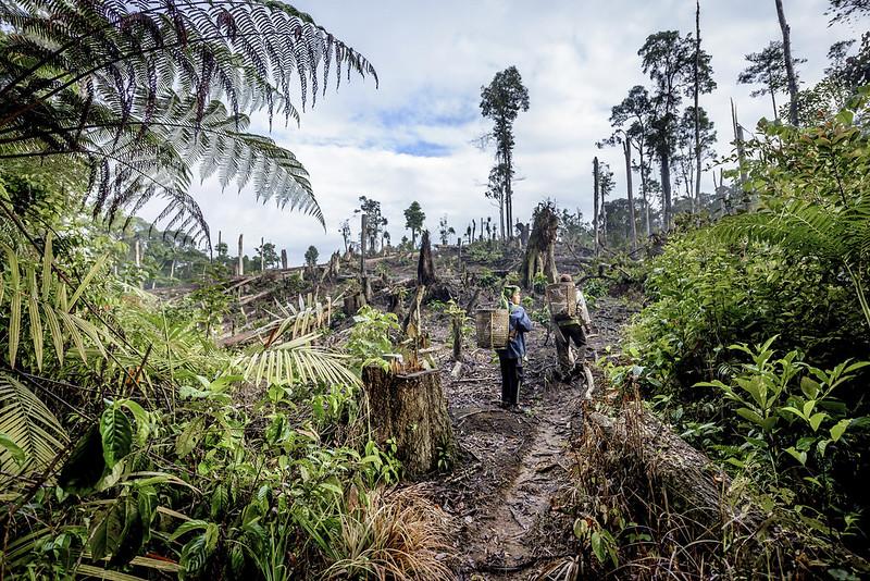 Cà phê bền vững và vấn đề môi trường