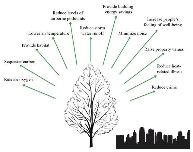Tree benefits