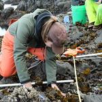 Rocky Intertidal Sea Star Surveys