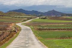 Paisaja de La Rioja 1