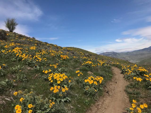 WEB: Burts Trail