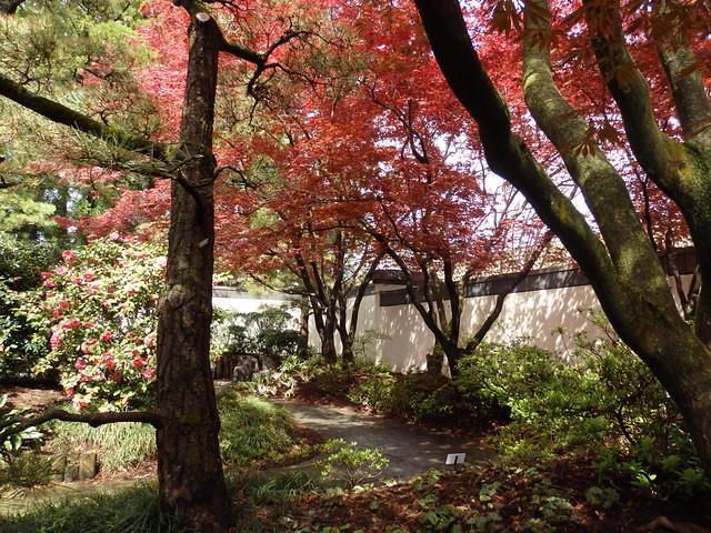 Garden in the Bonsai & Penjing Museum