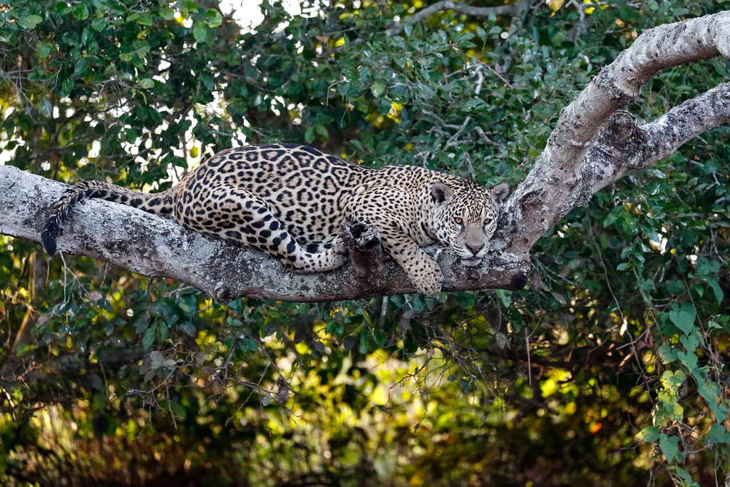 Pantanal_3033
