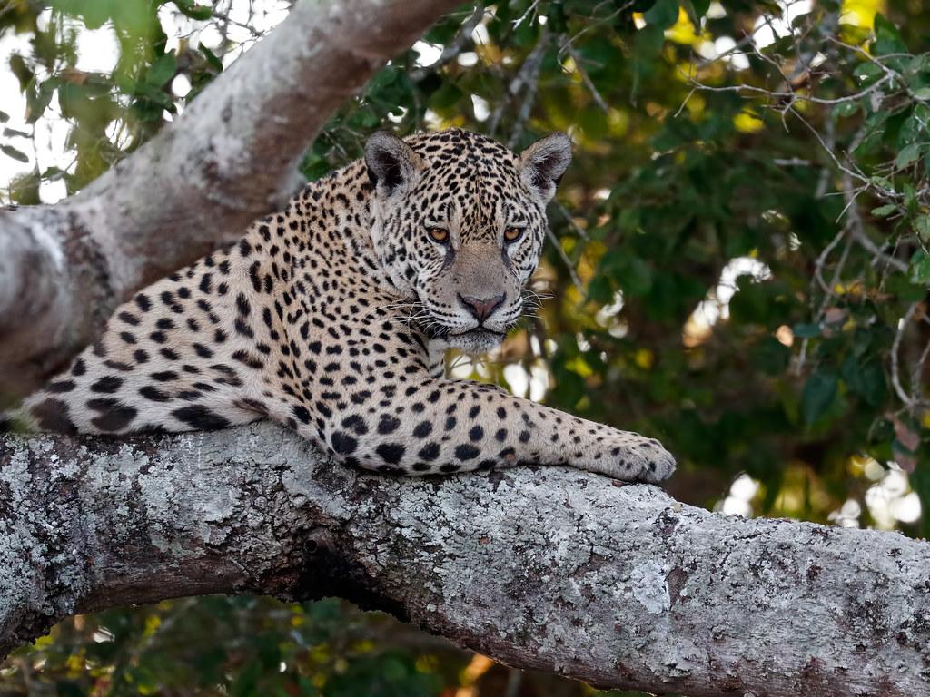 Pantanal_2986
