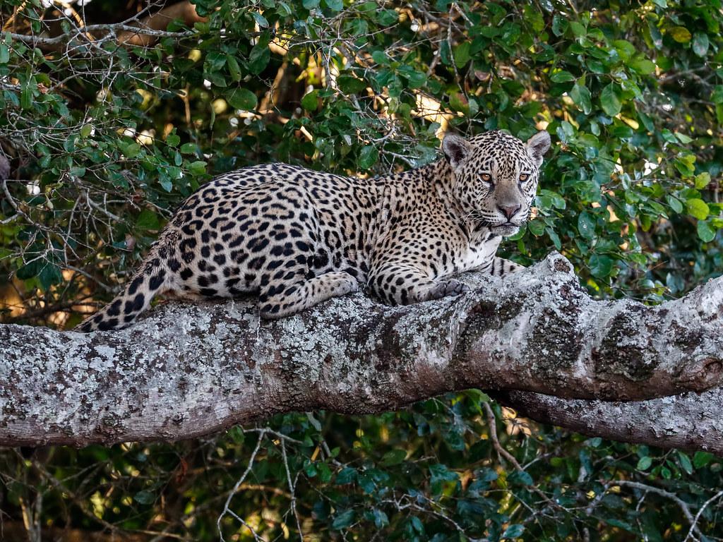 Pantanal_2983