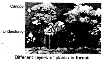 Forests Our Lifeline Class 7 Notes Science Chapter 17 1