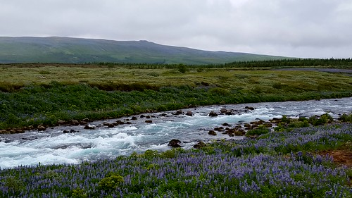 Iceland's Nootka lupine. From Read This: Inspiration, Joy, and Life in Patricia Leavy's SPARK