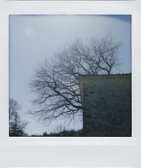 Polaroid Week, Day 4/1 - Chapel Tree