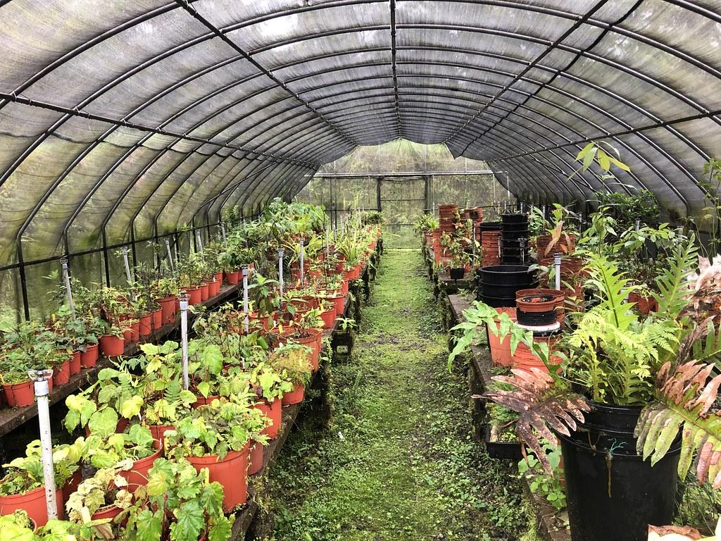 福山植物園的隧道網室容納上百種植物,大多靠人力視植物狀況調整。攝影:廖靜蕙