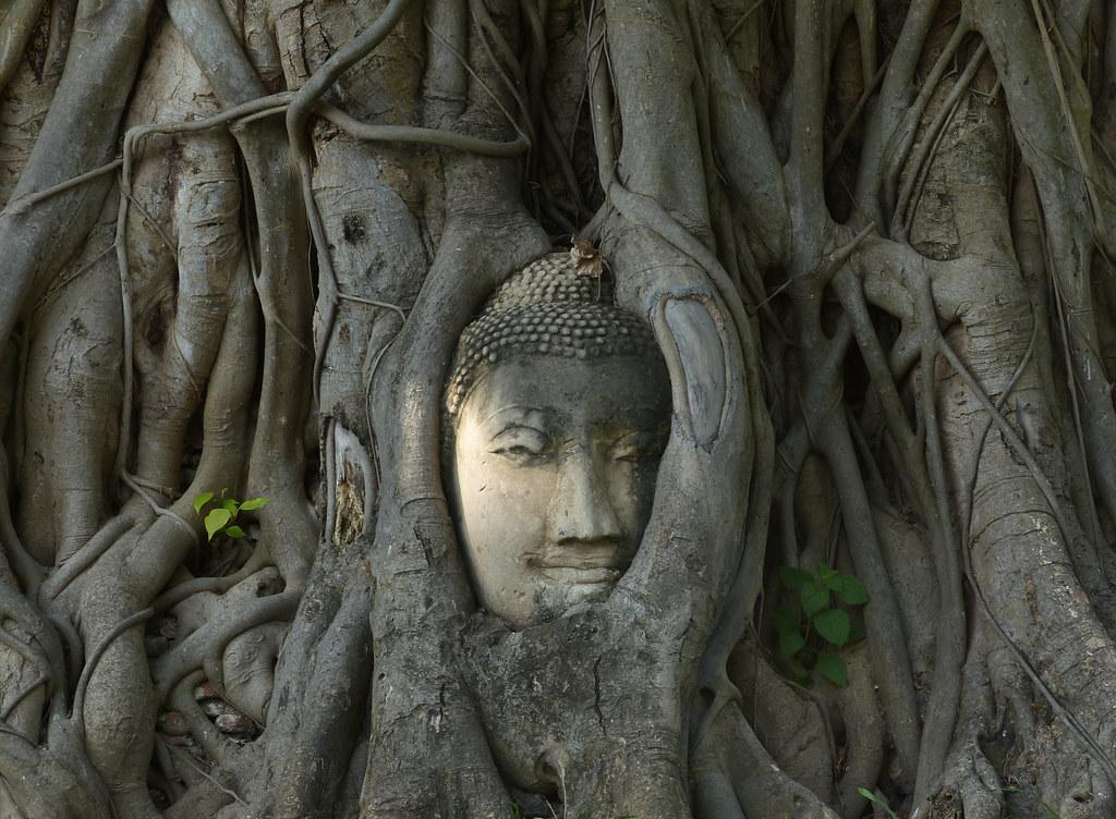 The Bohdi Tree