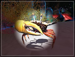 Spotlight Crustacean