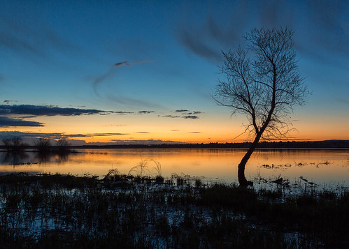 tree silhouette sunrise dawn daybreak bluehour lake sky landscape chatfieldstatepark lakechatfield colorado
