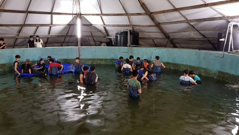 五隻救回小虎鯨安置於四草收容池