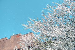 Snowing | Spring 2019 #114/365