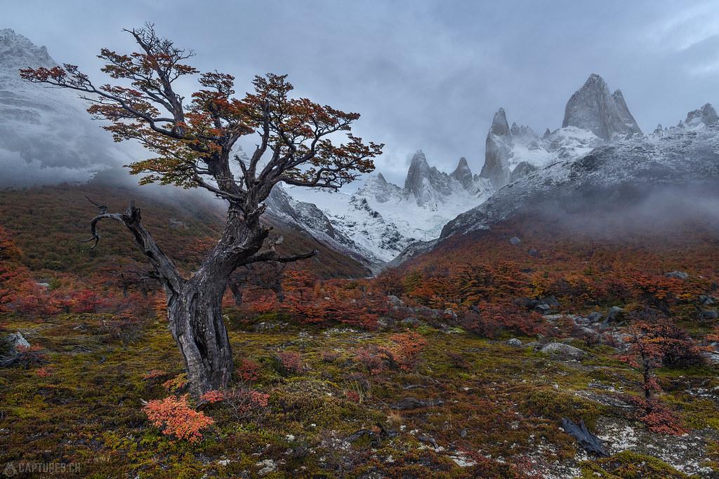 Tree in the foggy morning - El Chalten