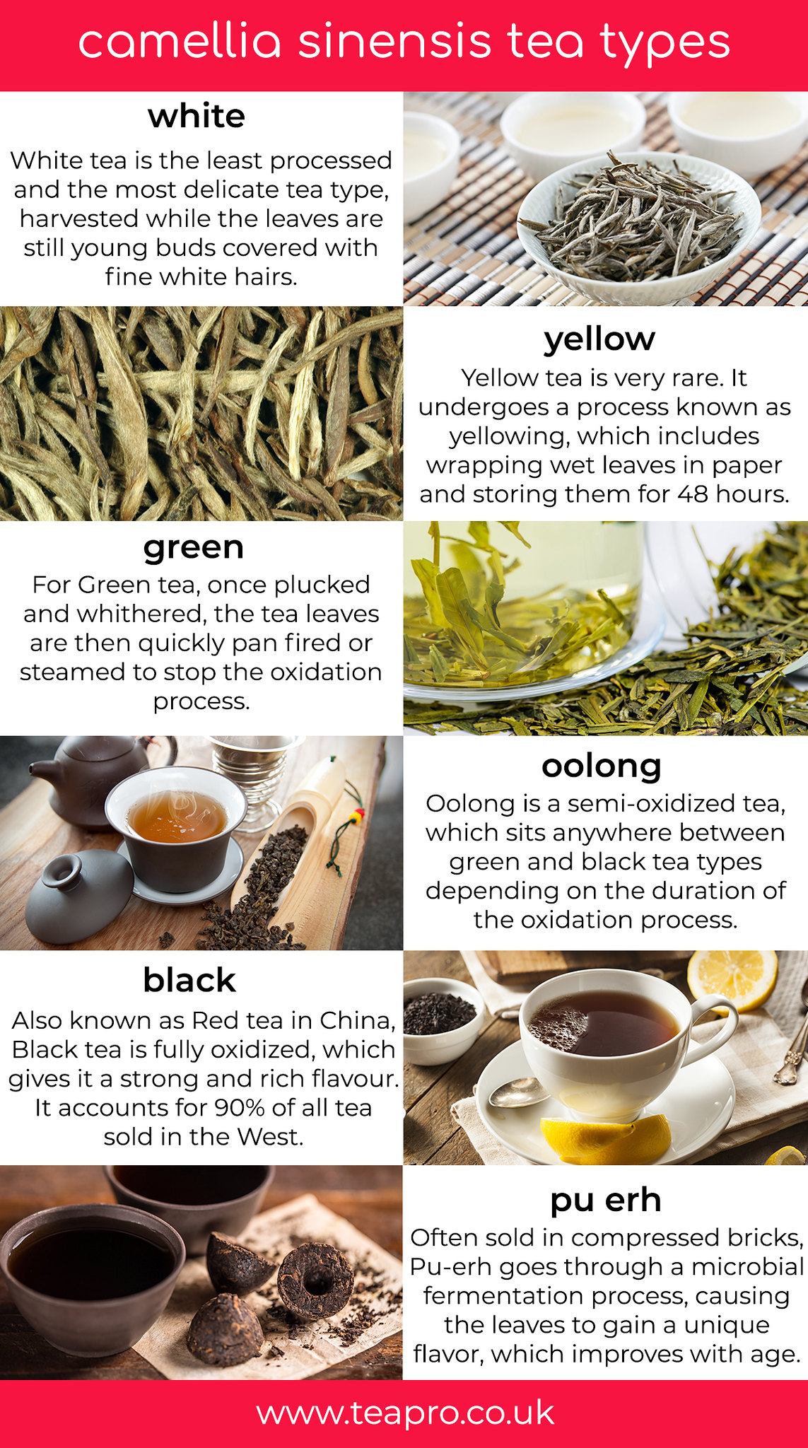 Teapro Infographic-tea-types