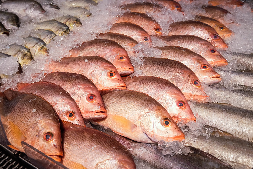Red Snappers on Display at Habitat by Honestbee