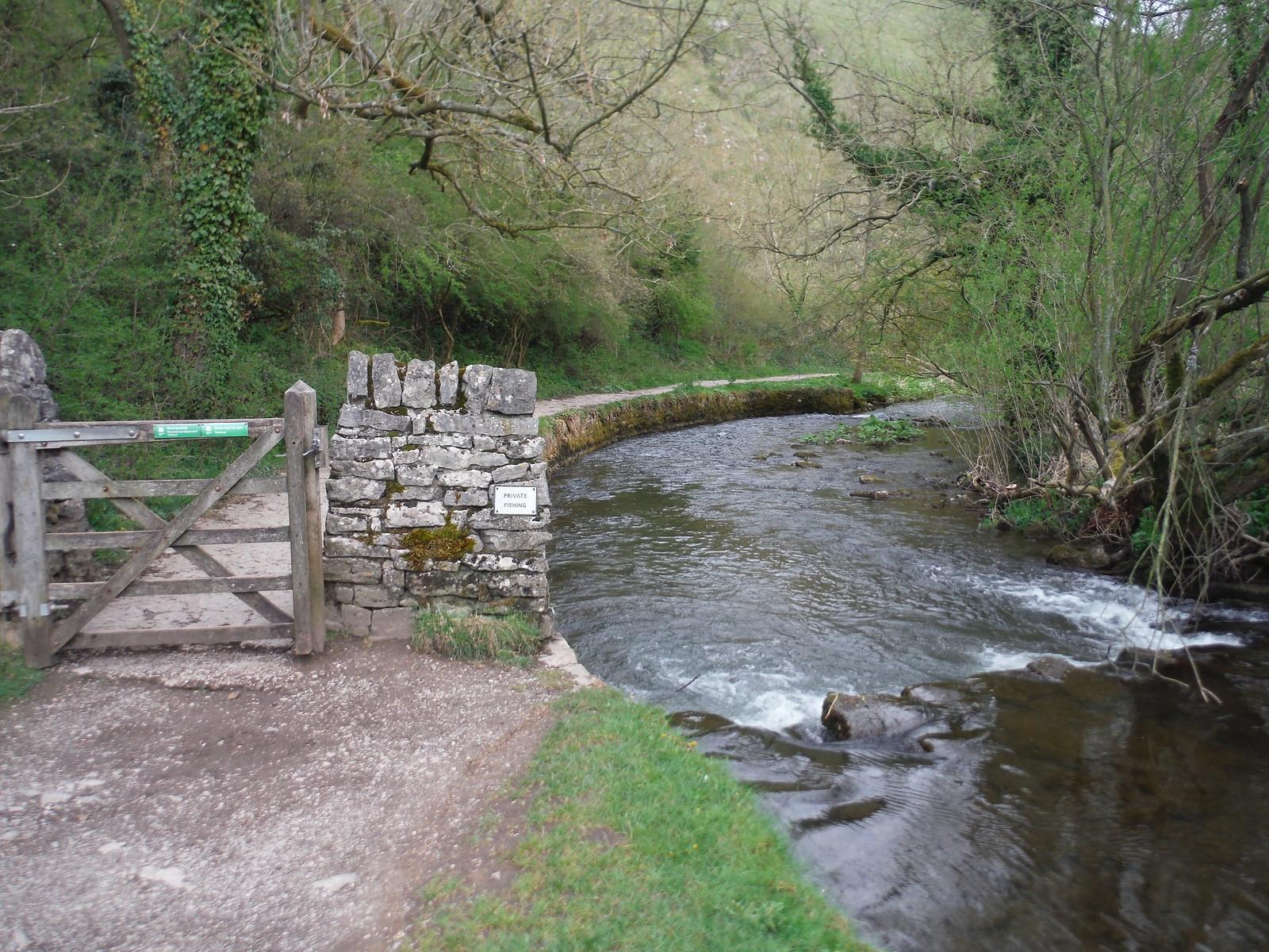 Path beside The Dove SWC Walk 326 - Dovedale (Ashbourne Circular) [Long Version via Alstonefield]