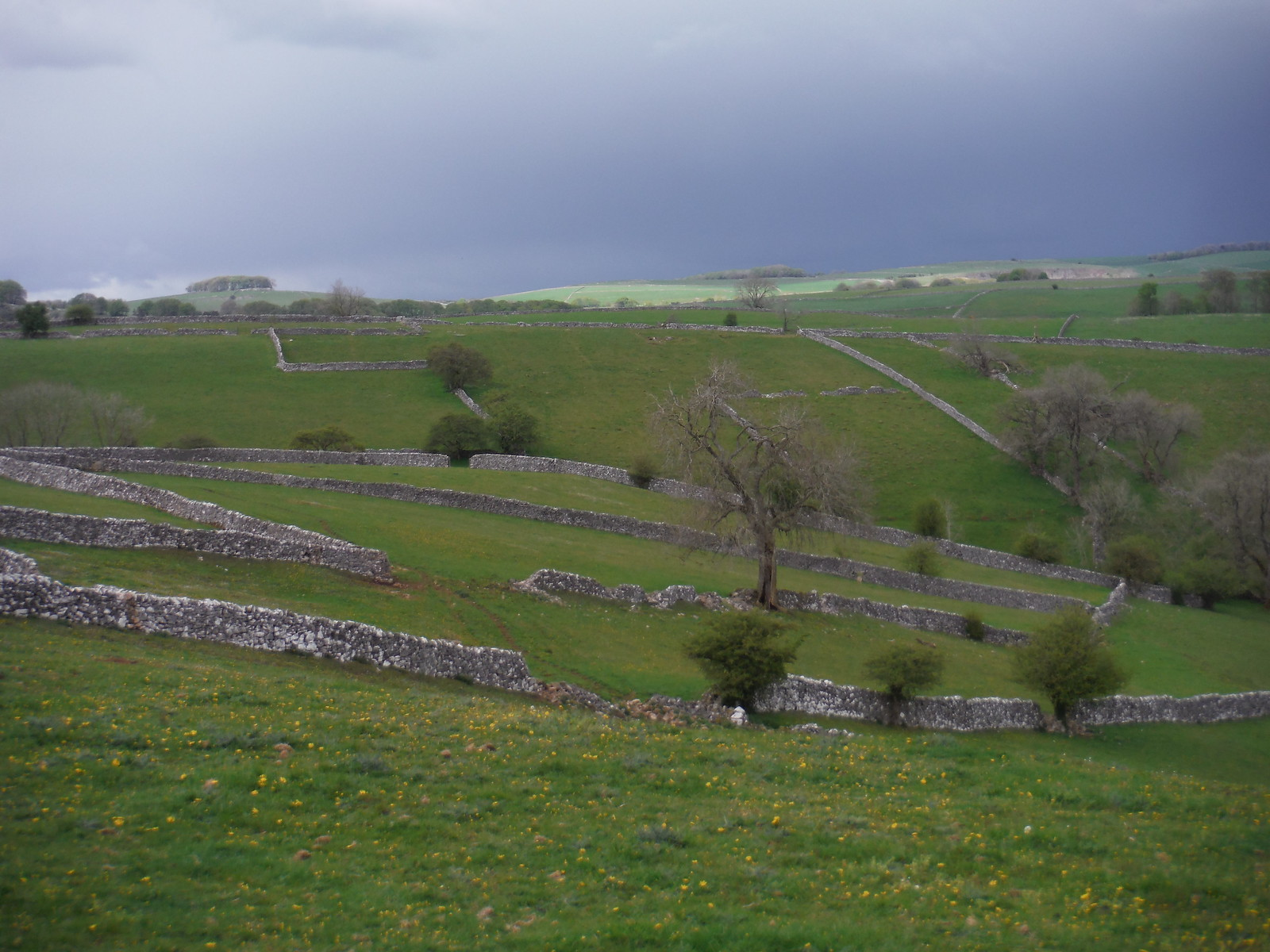Drystone Wall Pattern left of field above Milldale SWC Walk 326 - Dovedale (Ashbourne Circular) [Long Version via Alstonefield]