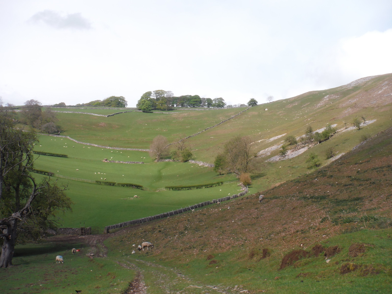 The Ascent to Ilam Tops (straight, then up to the right) SWC Walk 326 - Dovedale (Ashbourne Circular)
