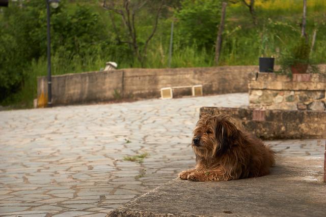 Zoe: dog or lion?