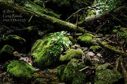 fern moss waterfall waterfalls wigwamfalls yankeehorseridge blueridgeparkway georgewashingtonjeffersonnationalforest nationalforest forest water creek stream