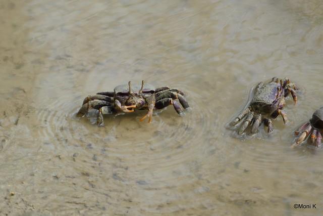 22-Krabben