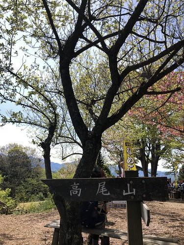2019.4.28陣馬山〜高尾山縦走 高尾山を示す標識