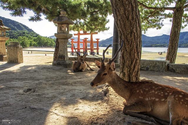 Itsukushima Island (Japan)