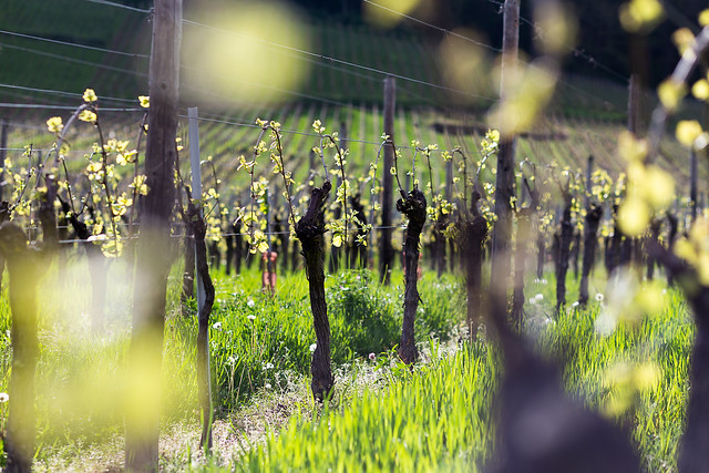 Delinat Weinreise Elsass 2019