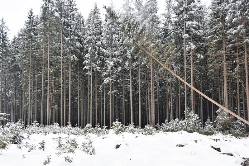 xwx Zimní těžba